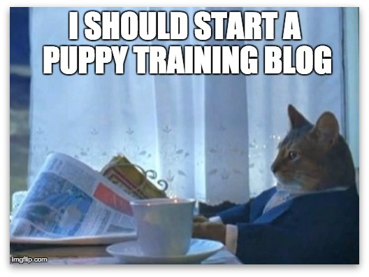 Meme of a cat planning to start a puppy training blog